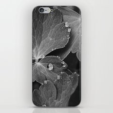 Black & White Spring  iPhone & iPod Skin