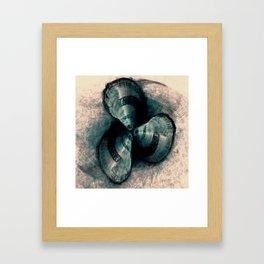 Shells in a row Framed Art Print