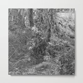Rain forest view with creek Metal Print