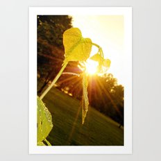 Redbud and Sunflare Art Print