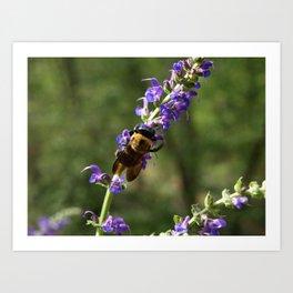 Bumble Bee on purple Art Print