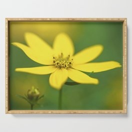 Coreopsis 4 Serving Tray