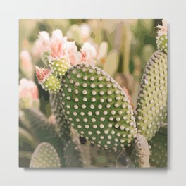 Vintage Prickly Pear Metal Print