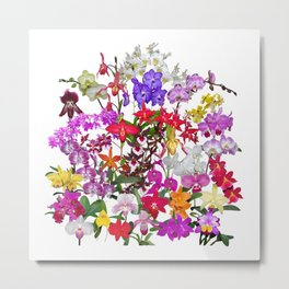 A celebration of orchids Metal Print