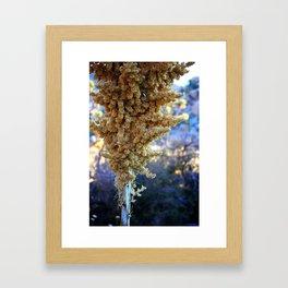 Desert Bloom Nolina Framed Art Print