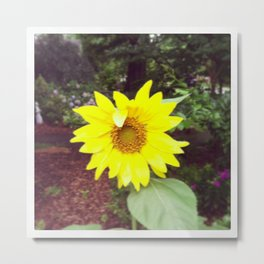 Winking Sunflower Metal Print