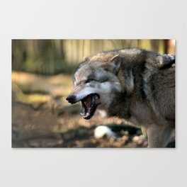 The wolf is hungry Canvas Print