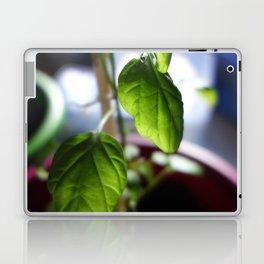 Sunlit Serrano Laptop & iPad Skin