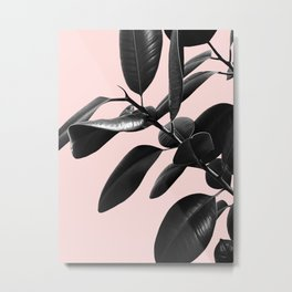 Ficus Elastica Blush Black & White Vibes #1 #foliage #decor #art #society6 Metal Print
