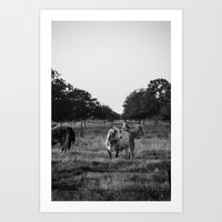 cows Art Prints featuring Cows by No Title Photography by April