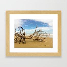 Tree Of Barnacles Framed Art Print
