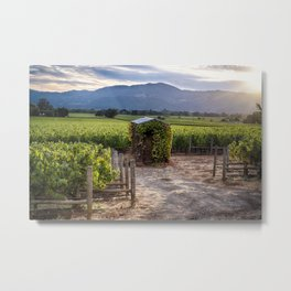 Little Shed In a Vineyard Metal Print