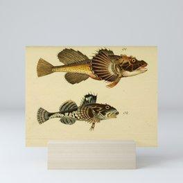 Illustrations and Descriptions of Fish (1787) - Fourhorn Sculpin; Shorthorn Sculpin Mini Art Print