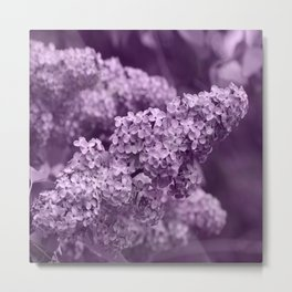 Pretty Lilac in the Spring Metal Print
