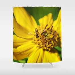 Hovering in the Sun Shower Curtain
