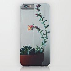 Succulent (1) Slim Case iPhone 6s