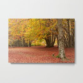 Colorful autumn in the woods of Canfaito park, Italy Metal Print