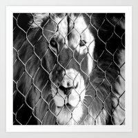 Caged Lion Art Print