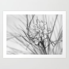 perfect gift from nature Art Print