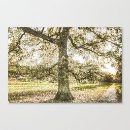 Snow tree Greenwich Park London Canvas Print