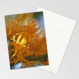 Orange Nuytsia Stationery Cards