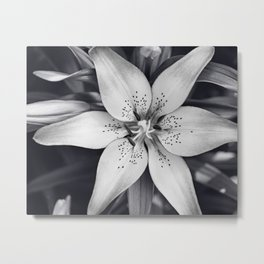 Black and White Lily Flower Photography, Grey Floral Art, Lillies Photo, Grey Lilly Nature Print Metal Print