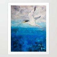 Crested Tern Art Print
