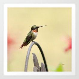 Tiny Hummingbird Art Print