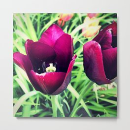 Purple Tulips in Bloom Metal Print