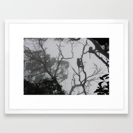 Misty Monkeys Framed Art Print