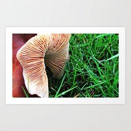 Mushroom and Dewdrops Art Print