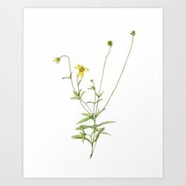 Coreopsis Wildflowers Art Print