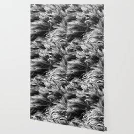 Feathered Wallpaper