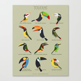 Toucans by Lili Chin Canvas Print
