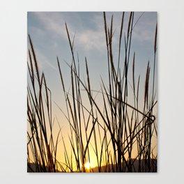 Wonderful sunset with teasel Canvas Print