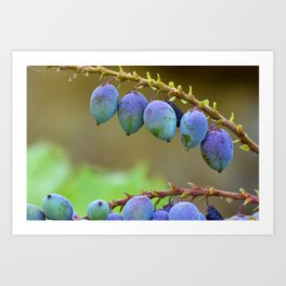 Early spring berries (blue, purple and green) Art Print