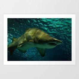 Shark #2 Art Print