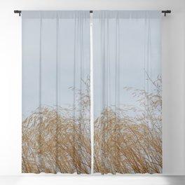 Golden weeds in summer Blackout Curtain