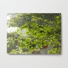 Green Leaves Metal Print