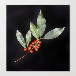 Silver Berry Canvas Print