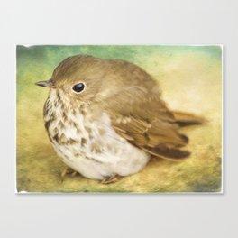 Bird Art - Patiently Waiting Canvas Print