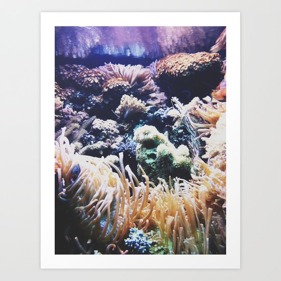 New York Aquarium Anemones  Art Print