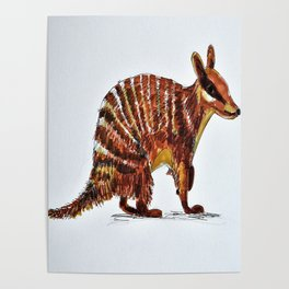 Banded Numbat Poster