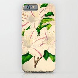 Azalea Alba Magnifica (Rhododendron indica) Vintage Botanical Floral Scientific Illustration iPhone Case
