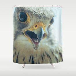 Common Kestrel Portrait Beak Wide Open (Falco tinnunculus) European kestrel. Shower Curtain