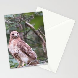 Hawk looking front Stationery Cards