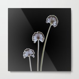 three flowers on black background Metal Print