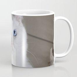 Ragdoll Cat Blue Eyes Coffee Mug