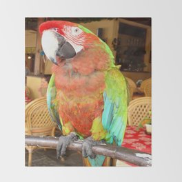 Harlequin Macaw On A Perch Throw Blanket