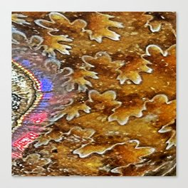 Opalized Sutured Ammonite Canvas Print